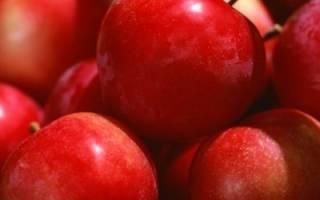 Хранение яблок зимой: какие сорта выбрать, когда собирать урожай, как организовать место для хранения