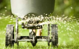 Когда сажать газон: помощь в выборе лучшего времени года для посадки