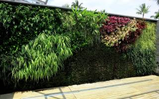Вертикальное озеленение своими руками: идеи для сада и создание фитомодуля для дома