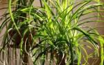 9 неприхотливых растений, которые можно не поливать долгое время