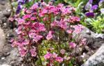 Альпийская горка в тени своими руками: как сделать дренаж и подобрать растения