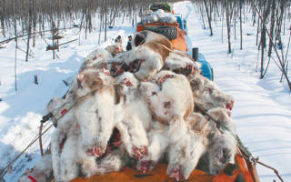 Новый вид оленей замечен на территории российского заповедника