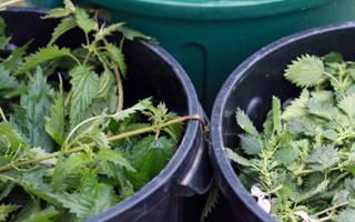 Как сделать удобрение из травы и сорняков, советы