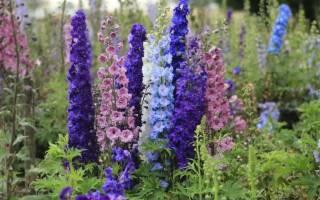 Многолетние растения, цветущие с начала и до конца лета!