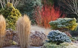 Деревья и кустарники для зимнего сада