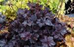 Растения, которые подойдут для зимнего цветника