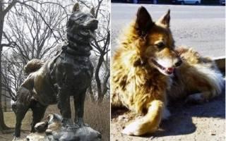 В Америка собака ушла от хозяина на 650 км