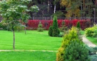 Как правильно обрабатывать почву: рыхление, удобрения, подкормка, советы огородникам