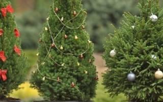 Практичные подарки дачнику на новогодний праздник