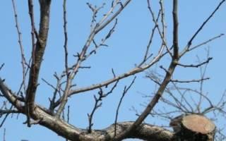 Как правильно сделать зимнюю обрезку деревьев