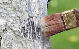 Проблемы, которых поможет избежать побелка деревьев перед зимой