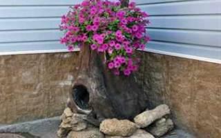 Пень-клумба своими руками: технология подготовки вазона и посадка растений