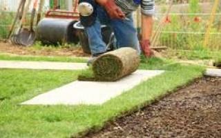 Купить рулонный газон или вырастить посевной: что лучше