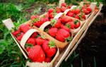 Хотите вкусной земляники-создайте свой сорт