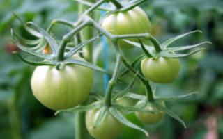 Почему в теплице плохо зреют и не краснеют помидоры