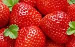 Чем удобрять клубнику после сбора урожая + видео