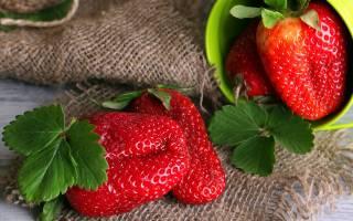 Выращивание клубники — полезные советы