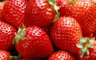 Как сохранить урожай клубники: простые способы