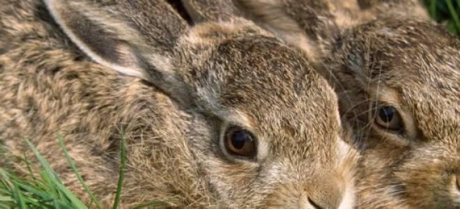 Как защитить свой садовый участок от нападения зайцев