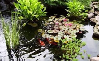 Растения для пруда на даче своими руками: обзор видов и фото с советами по уходу