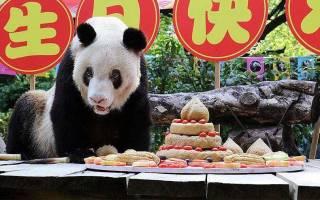 Самая старая панда в зоопарке отмечает день рождения