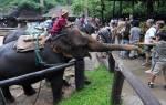 В таиланде слон напал на туриста