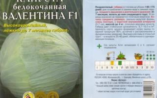 Капуста Валентина: характеристика сорта, правила выращивания и ухода + фото