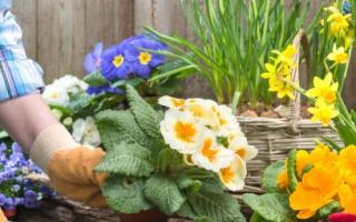 Какие цветы посадить на даче в саду и на клумбе возле дома