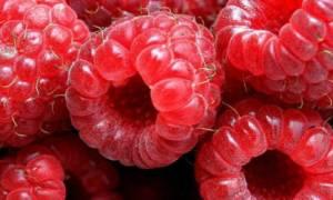 Выращивание малины: посадка и правильный уход, обрезка кустов, как правильно