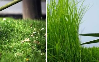 Стрижка газона: первая и последняя, когда и как стричь