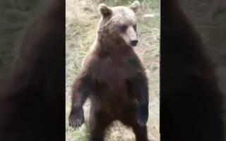 В Якутии медведи окружили людей в лесу