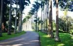Перадения – зелёная сокровищница Цейлона