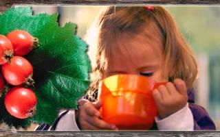 Боярышник: полезные свойства и противопоказания, применение для взрослых и детей