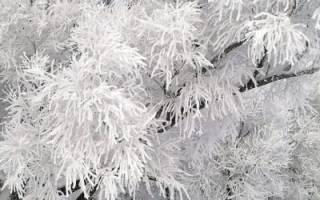 Правильный уход за плодовыми деревьями зимой, обработка от вредителей и побелка