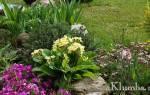 Альпийская клумба: как сделать цветочную горку своими руками по фото