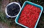Плодово-ягодные кустарники: от посадки саженцев до сбора урожая и обрезки