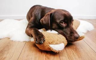 Собака помогла раненному хозяину избежать смерти