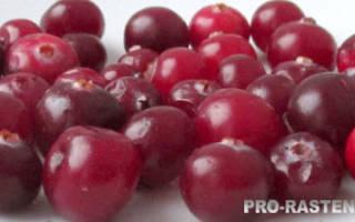 Клюква с кисло-сладким вкусом : выращивание, размножения, уход