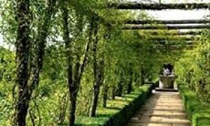 Деревянные перголы для дачи: фото обзор популярных моделей