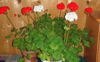 Комнатные растения, которые нужны в каждом доме
