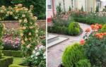 Розы в саду: дизайн и фото оригинальных розариев для украшения ландшафта