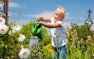 Экологические принципы пермакультуры