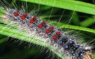 Луговые растения и химические средства против насекомых вредителей + Видео