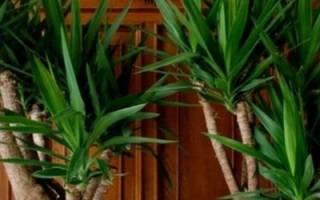 Какие комнатные растения нельзя сажать друг с другом или держать рядом