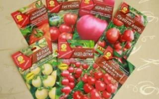Какие сорта помидоров выбрать, когда сеять, как правильно ухаживать