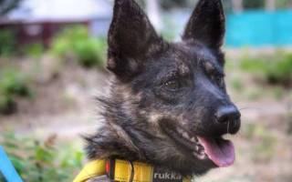 На Украину вернулась собака задержанного в Керчи моряка