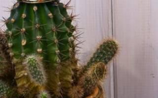 Как украсить дом растениями на Новый год