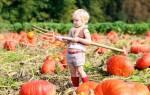 Сентябрь: работы на участке, в саду, огороде и цветниках