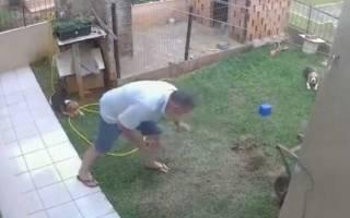 В Бразилии мужчина подорвал огород чтобы избавиться от насекомых