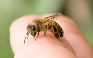 Как избавиться от ос и пчел в саду и в доме: знакомимся с эффективными способами